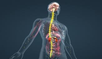 Epinefrin (Katekolamin) Seviyelerinin Yükselten Faktörler