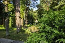 Sert ve Yumuşak Ağaçlar
