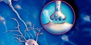 Serotonin in Neuropsychiatric Disorders