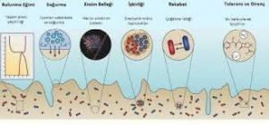 Genes Playing a Role in Biofilm Formation in Food Technology