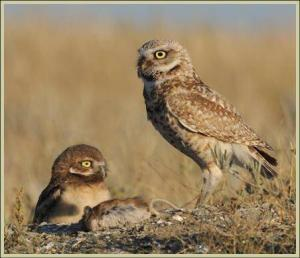 What Factors Affect Reproduction Among Owls?