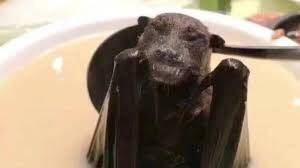 Etiology of Bats and Related Diseases