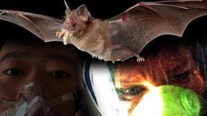 History of Bats and Bat-borne Viruses