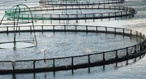 Preparation of Special Fish Feed with Food Industry Wastes