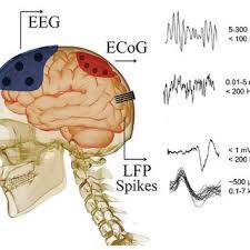 Neural Recording and Stimulation