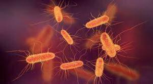 Types of Actinobacteria