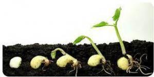 Applications of Actinobacteria on Plants