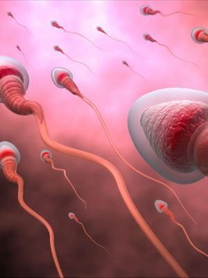 Proteomics to Improve Future IVF Outcome