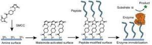 Biocatalysts and Industrial Enzymes