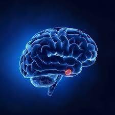 Effects of Growth Hormone on Cognition and Metabolic Activity of the Brain