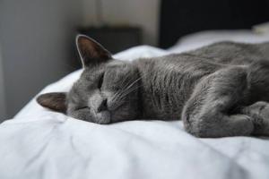 Correct Sleep Awareness