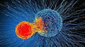 MicroRNA and MRNA Degradation