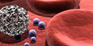 General Characteristics of Regulatory T Cells