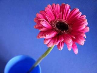 [Resim: PinkGerb.jpg]